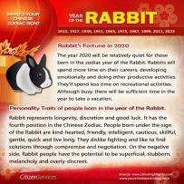 4-rabbit