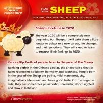 8-sheep